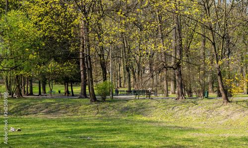 Aluminium Prints Birch Grove Bednarski Park in Krakow