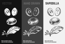 Hand Drawn Sapodilla. Fruits Sketch Vector Set