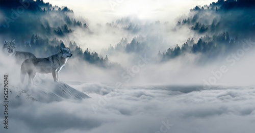 Photo Stands Dark grey Wolfs in foggy, snowy forest