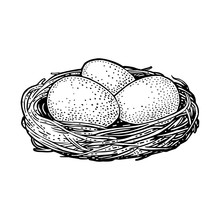 Three Bird Eggs In The Nest. Vector Black Vintage Engraving