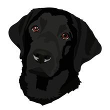 Black Labrador Vector2