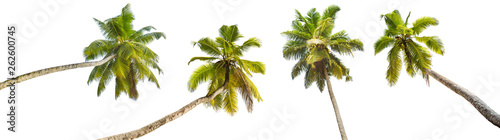 Deurstickers Palm boom Palm Trees Isolated