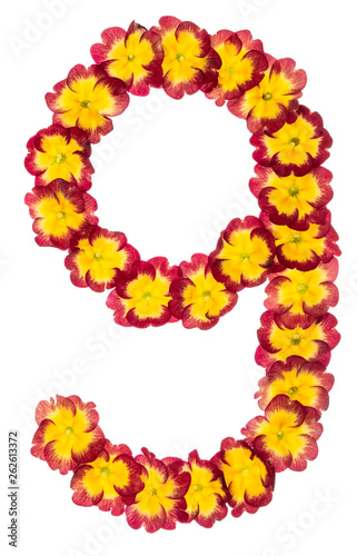 Fotografia  Numeral 9, nine, from natural flowers of primula, isolated on white background