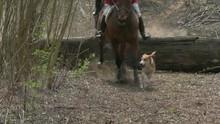 Horseback Fox Hunting With Hou...