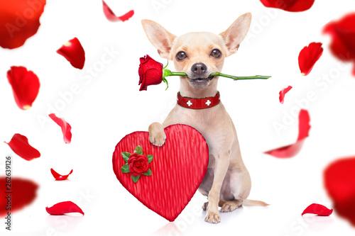 Photo sur Aluminium Chien de Crazy valentines dog