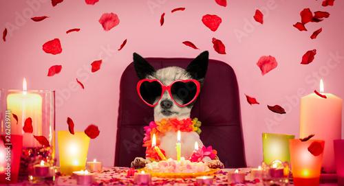 Photo sur Aluminium Chien de Crazy valentines happy birthday dog