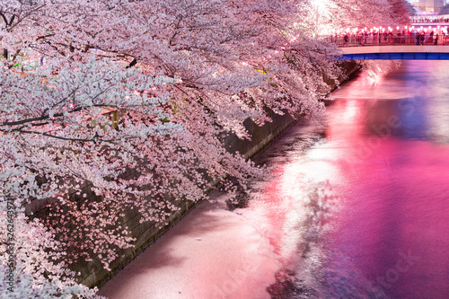 Canvas Prints Light pink 目黒川の夜の桜