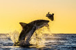 canvas print picture - Silhouette of jumping Great White Shark. Red sky of sunrise.  Great White Shark  breaching in attack. Scientific name: Carcharodon carcharias. South Africa.