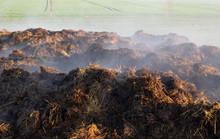 Smoking Heap Of Manure On A Field