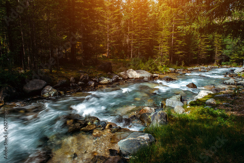 Tuinposter Summer landscape of mountain river among green trees. Sunlit river in the mountain forest. Picture of beautiful nature.