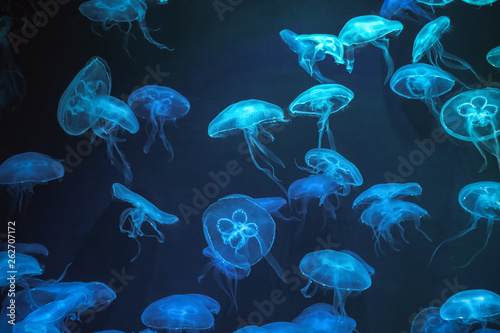 Jellyfish with neon glow light effect in Singapore aquarium Poster Mural XXL