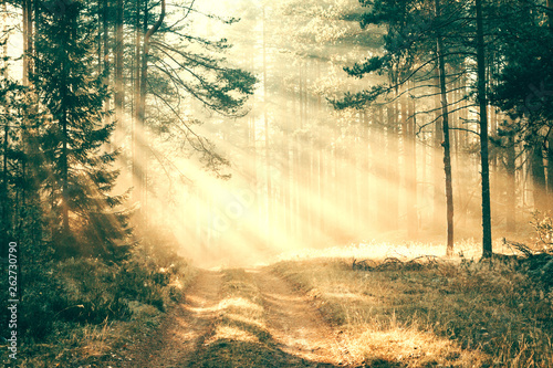 Arbre sunrays in the forest