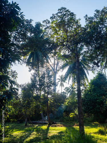 Photographie  The backlight of the sun shining through tropical trees