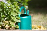 Fototapeta Do pokoju - jardin arrosoir eau herbe fleur