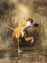 A Golden And White Coated Dog With A Long And Lanky Form Splashes Through The Shallow Waters Of A Grassy Wetland. This Dog Is A Lurcher, And Can Be Found In Ireland And G
