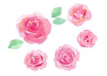 ピンクのバラ5種の水彩イラスト(トレースベクター)