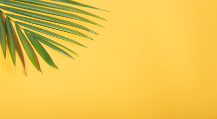 Green tropical palm leaves on yellow background with sunlight. Minimal summer creative flat lay.