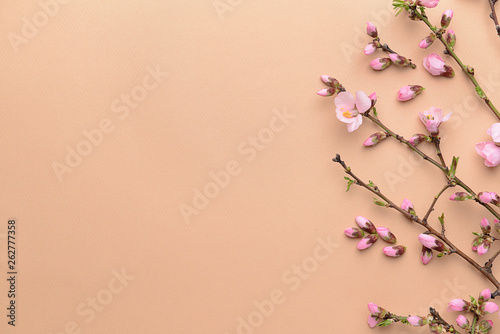 Tuinposter Magnolia Beautiful blossoming branches on color background