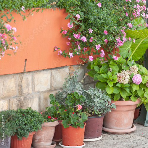 Photo Stands Stairs A lot of clay flower pots with flowering and green plants. Ornamental Garden. Home garden landscape