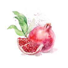 Watercolor Ripe Bright Pomegranate