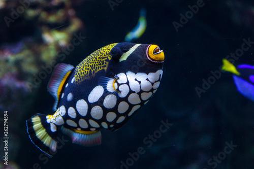 Foto bright exotic motley fish