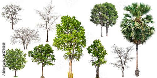 Fotografía  big collecttion of tree on white background