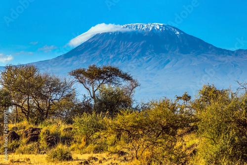 In de dag Afrika Desert acacia in the savanna
