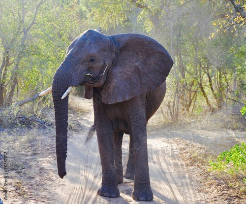 Photo  Young Elephant