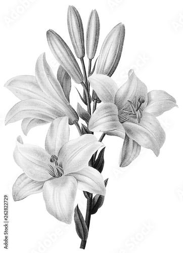 Fototapety, obrazy: Botanical Illustrations in Halftone Pattern