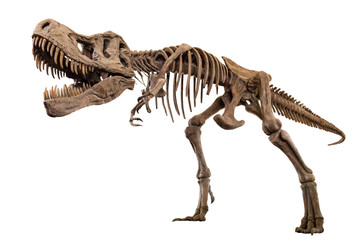 Tyrannosaurus Rex skeleton on isolated background . Embedded clipping paths .