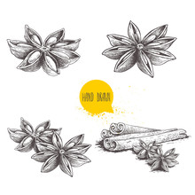 Anise Star Sketches Set. Singl...