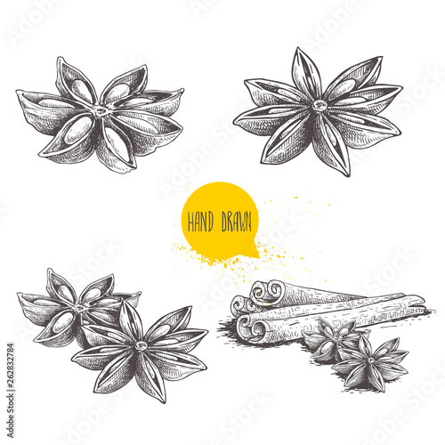Fototapeta Anise star sketches set. Single, batch and composition with cinnamon sticks. Herbs and condiment retro style hand drawn collection. Vector illustrations isolated on white background. obraz