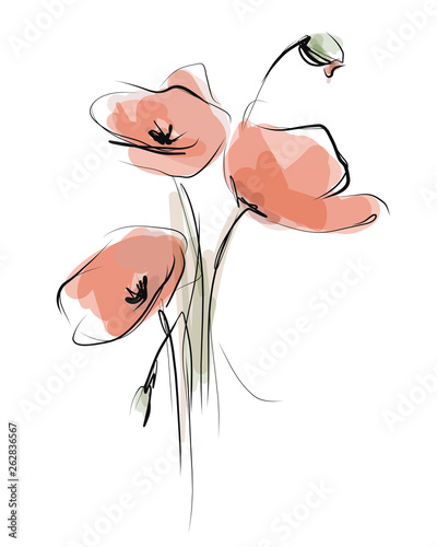 Painted poppies. Sketch, vector