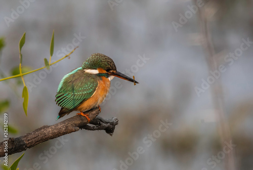 Photo A kingfisher perched on a small twig inside Keoladeo National Park