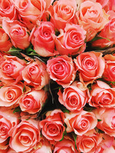 Closeup Of Several Coral Pink-colored Rose Bouquets Seen From Above.