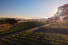 Aerial Scenes Over Wine Countr...