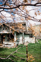 Abandoned House Behind A Tree.