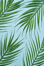 Green Ferns On Paper Background.