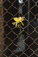 A Flower In The City