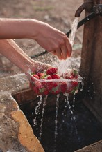 Crop Female's Hands Washing Strawberries In Transparent Plastic Box Outdoors