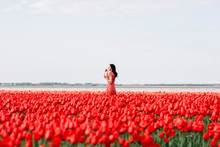 Young Woman In A Red Tulip Field