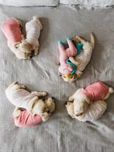 Golden Retriever Puppies In Onesies