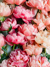Background Of Pink Peonies