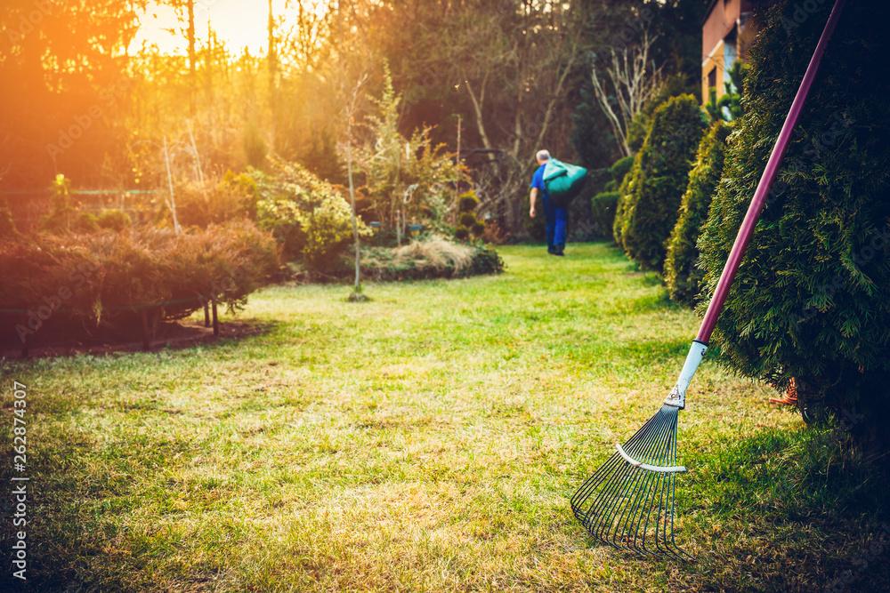 Fototapety, obrazy: Raking grass in the garden. The man fertilizes the soil in the garden, preparing for work on the garden. Preparation for the gardening season. The gardener holds a rake in his hand.