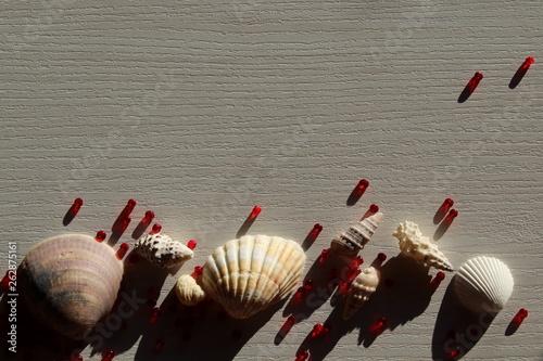 Fotografía Sfondo con conchiglie e perline