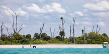 Sunbleached Dead Trees Reach For The Sky On A Narrow Key With Sandy Beach In The Gulf Of Mexico Near Englewood, Florida, USA, In Early Spring