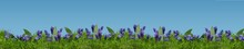 Grass And Flowers Row On Blue Background