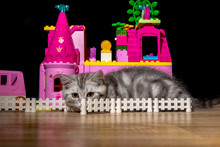 Kitten Plays Around A Dollhouse