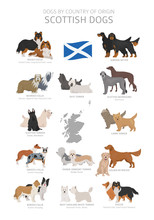 Dogs By Country Of Origin. Scottish Dog Breeds. Shepherds, Hunting, Herding, Toy, Working And Service Dogs  Set