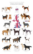 Dogs By Country Of Origin. English Dog Breeds. Shepherds, Hunting, Herding, Toy, Working And Service Dogs  Set